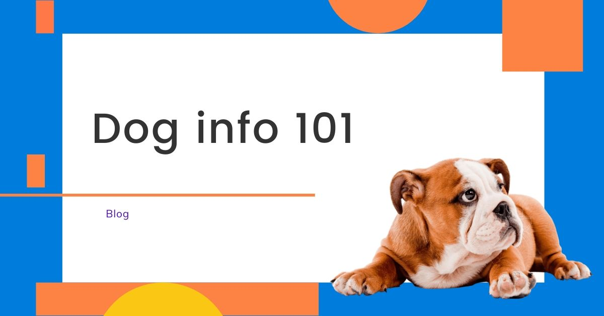 Dog Info 101
