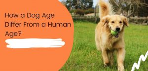 How a Dog Age Differ From a Human Age?